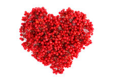 Viburnum  in heart Royalty Free Stock Photos
