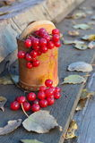 Viburnum jagody Fotografia Royalty Free