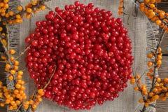 Viburnum jagody na talerzu fotografia royalty free