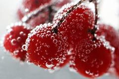 Viburnum jagody pod wodą, krople bardzo zamykają zdjęcie stock