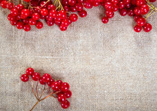 Viburnum on linen background. Colorful red viburnum berries on linen background Stock Image