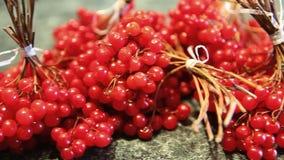 Viburnum opulus berries or Guelder rose stock video footage