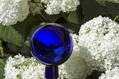 Viburnum opulus Royalty Free Stock Image