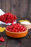 Viburnum rouge dans une cuvette en céramique, sucre, un groupe de baies Images stock