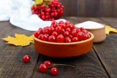 Viburnum rouge dans une cuvette en céramique, sucre, un groupe de baies pour le thé, confiture Image libre de droits