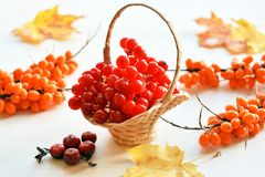 Viburnum, sea-buckthorn and cranberry. Red ripe viburnum, orange sea-buckthorn and cranberry berries in small wattled basket over white wooden background, autumn stock photo