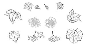 Viburnum, Set Of Pictograms Royalty Free Stock Images