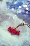 Viburnum in the snow Stock Photos
