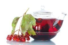 Viburnum tea in glass teapot Stock Photography