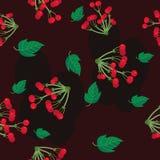Viburnum Texture Stock Images