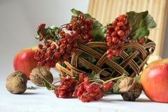 Viburnum vermelho na cesta de vime Imagens de Stock