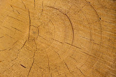Vice-cut tree trunks Stock Photography