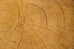 Vice-cut tree trunks Stock Photography