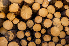 Vice-cut tree trunks Stock Images