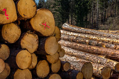 Vice-cut tree trunks Royalty Free Stock Image
