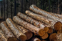 Vice-cut tree trunks Royalty Free Stock Images