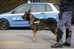 Vicence, VI, Italie - 28 janvier 2017 : La police de berger allemand fait Image stock