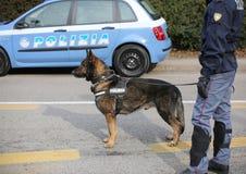 Vicenza, VI, Italy - January 28, 2017: German Shepherd police do Stock Photos