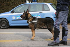 Vicenza, VI, Italy - January 28, 2017: German Shepherd police do Stock Image