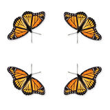 Viceroy Butterfly Limenitis archippus. Beautiful Viceroy Butterfly Limenitis archippus full view from above wings spread open close up on white background cut royalty free stock photo