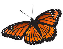Viceroy Butterfly Vector Royalty Free Stock Photo