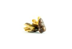 Vicia faba bean on white background Stock Photo