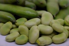Vicia faba or Faba bean. Close up view on Vicia faba or Faba bean...pod and beans stock photos