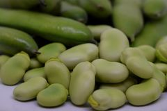 Vicia faba of Faba boon stock foto's