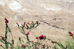 In the vicinity of the Dead Sea Stock Photography