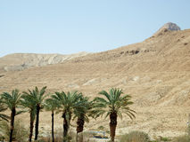In the vicinity of the Dead Sea. Desert plants. In the vicinity of the Dead Sea Stock Images