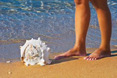 Vicino ad un seashell Immagine Stock