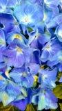 Vicino al blu Immagini Stock