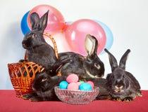Vicino al coniglio nero delle uova di Pasqua quattro fotografie stock libere da diritti
