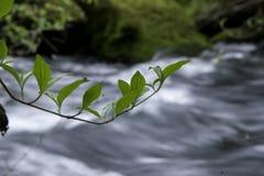 Vicino al fiume della montagna Fotografie Stock