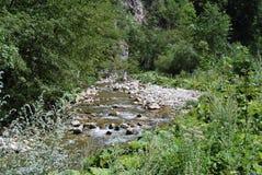 Vicino al fiume della montagna Immagine Stock