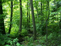 Vicino alla foresta Immagini Stock