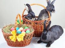 Vicino con al canestro di Pasqua che si siede i conigli neri Immagine Stock Libera da Diritti