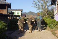 Vicino a Kalaw, lo Stato Shan nel Myanmar, 01-20-2018 Uomo fotografia stock libera da diritti