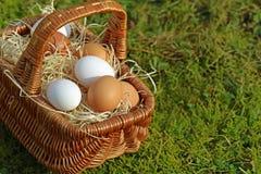 Vicino su, canestro delle uova nel muschio, spazio della copia fotografia stock libera da diritti