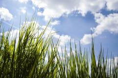 Vicino su, macro delle gocce di rugiada sulle lame di erba fresca, raggi di mattina del sole, risparmio dell'acqua e concetto ver immagine stock