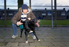 Vicious owner and dog. An aggressive dog, being set loose by his vicious owner in an suburbian area stock images