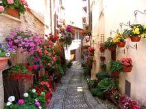 Vicoli di Windows, del balcone e del fiore a Spello - Perugia Immagine Stock