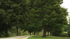 Vicolo allineato albero nel parco archivi video