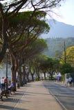 Vicolo con gli alberi Immagine Stock Libera da Diritti