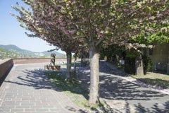 Vicolo con il fiore sakura Immagine Stock Libera da Diritti