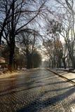 Vicolo con ombra lunga dagli alberi sulla strada di pietra dei mattoni Fotografia Stock