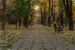 Vicolo coperto di foglie fotografia stock
