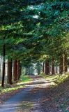 Vicolo d'avvolgimento del paese allineato albero in autunno fotografia stock libera da diritti