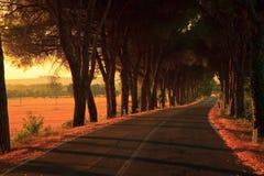 Vicolo degli alberi Fotografia Stock