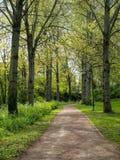 Vicolo degli alberi con le nuove foglie Fotografie Stock Libere da Diritti